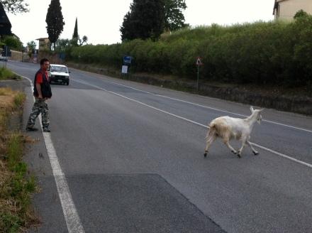 La capra ribelle